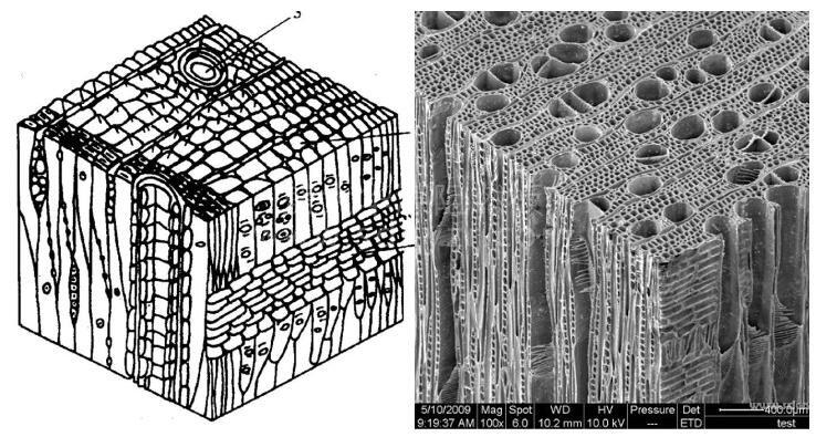 木材改性技术